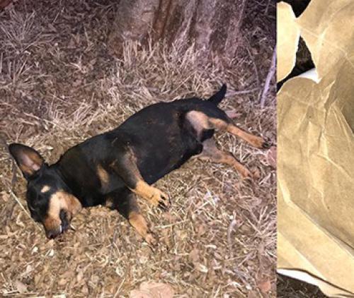 Zoutpansberger | News | Stray dogs is a municipal problem